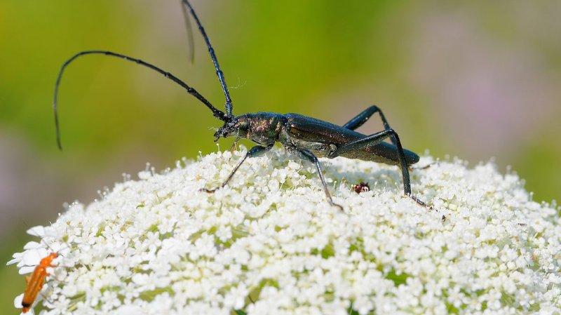 Gingins: cinq élus mobilisés pour deux insectes