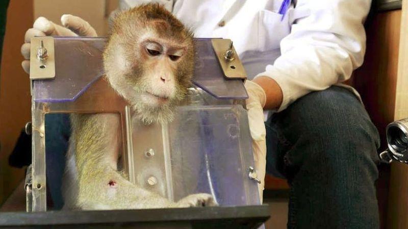 Une pétition veut stopper des expériences sur des singes à Fribourg