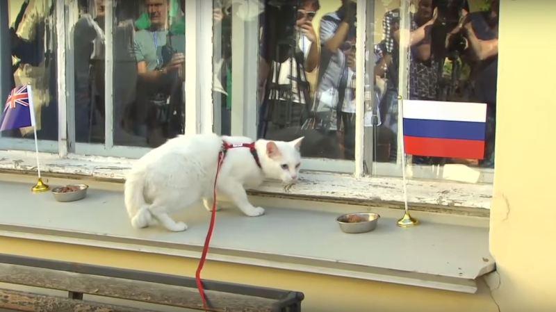 Mondial 2018: le chat Achille désigné pronostiqueur officiel