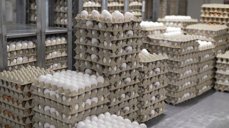 Consommation: les Suisses n'ont jamais mangé autant d'œufs