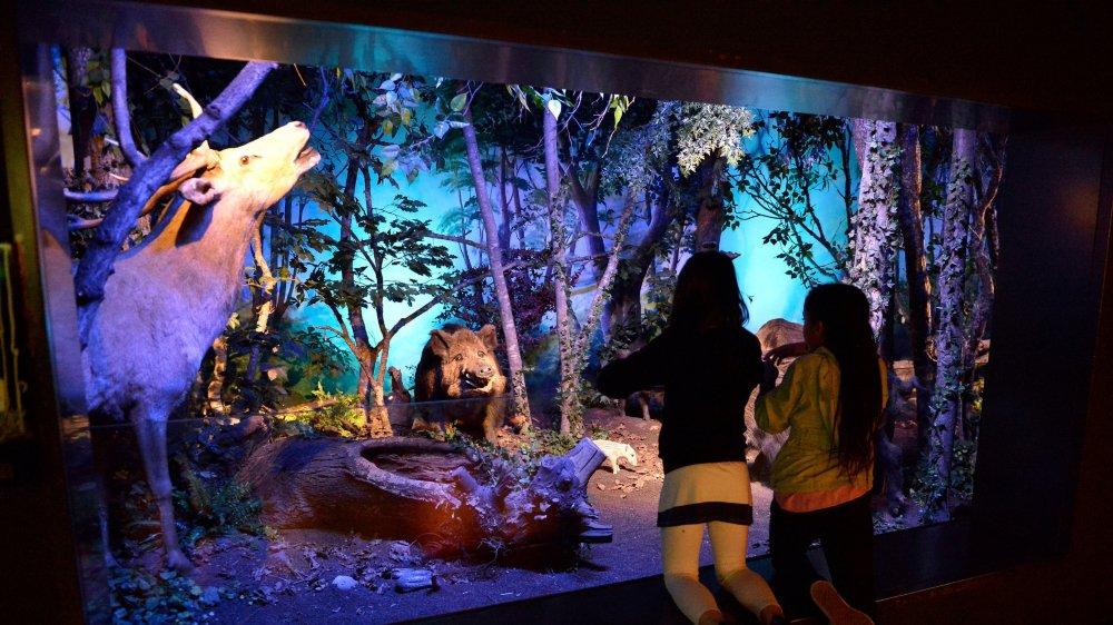 Le Muséum d'histoire naturelle (ici en 2013) proposera cette année une immersion dans les limbes de l'espace-temps.