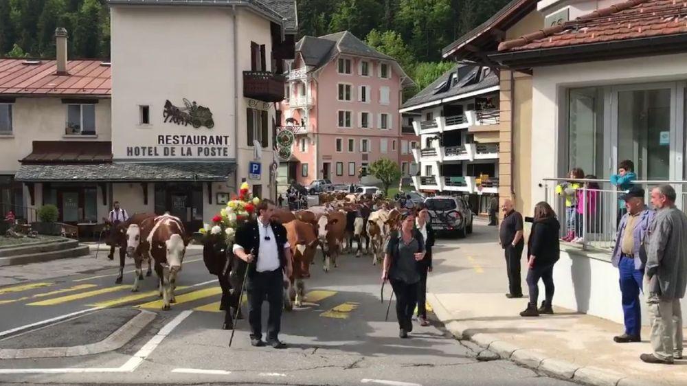 Le troupeau de Marc Bory lors de l'inalpe ce lundi à Saint-Cergue
