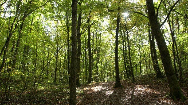 La méthanation du bois, une alternative durable pour valoriser nos forêts
