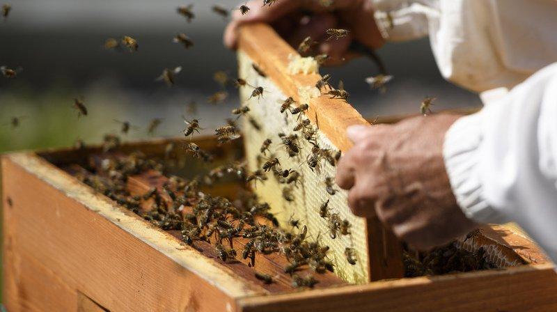 """France: un """"convoi mortuaire"""" de ruches pour dénoncer l'utilisation de pesticides qui tuent des milliers d'abeilles"""