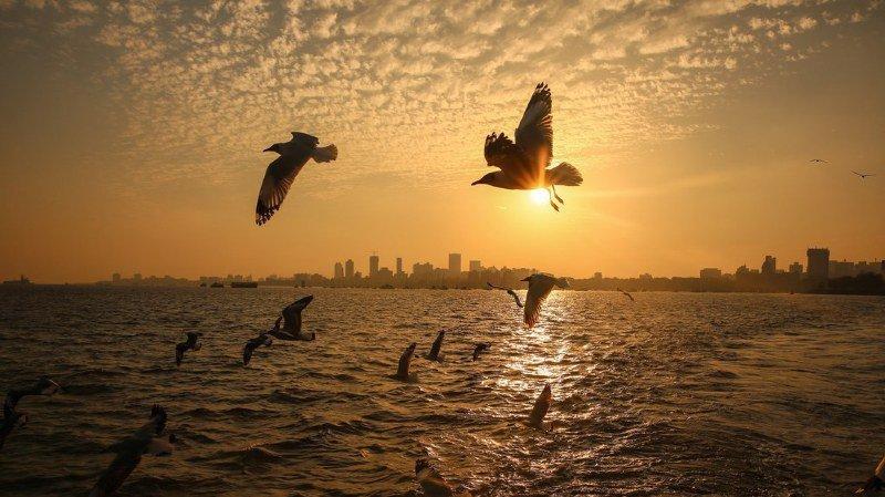 Ornithologie: une étude révèle les raisons de la migration des oiseaux