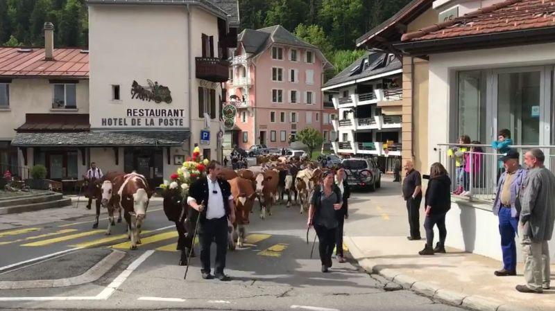 La question du jour: pourquoi les troupeaux ne montent pas tous en même temps à l'alpage?