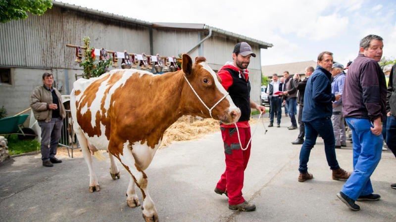 Duillier: une vache d'exception célébrée chez Olivier Chambaz