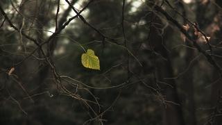 L'art de jouer de la musique avec des feuilles d'arbres