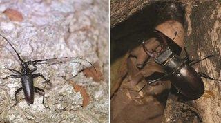 Pourquoi le Canton veut sauver ces deux insectes