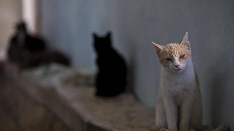Australie: les chats errants tuent plus d'un million de reptiles par jour