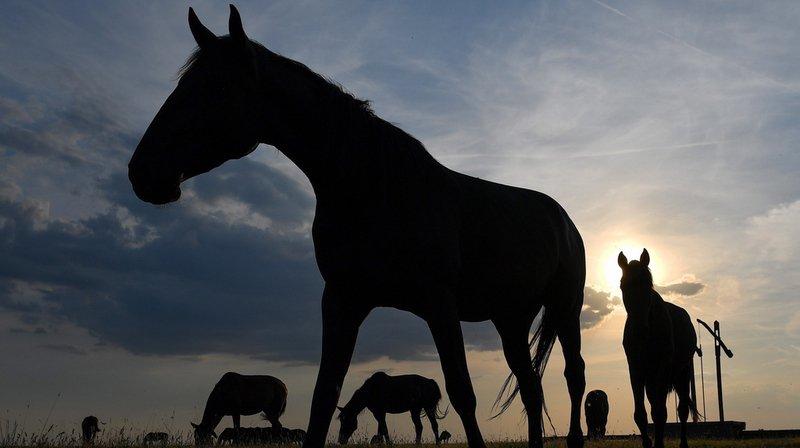 Saint-Gall: une femme condamnée pour cruauté envers les animaux