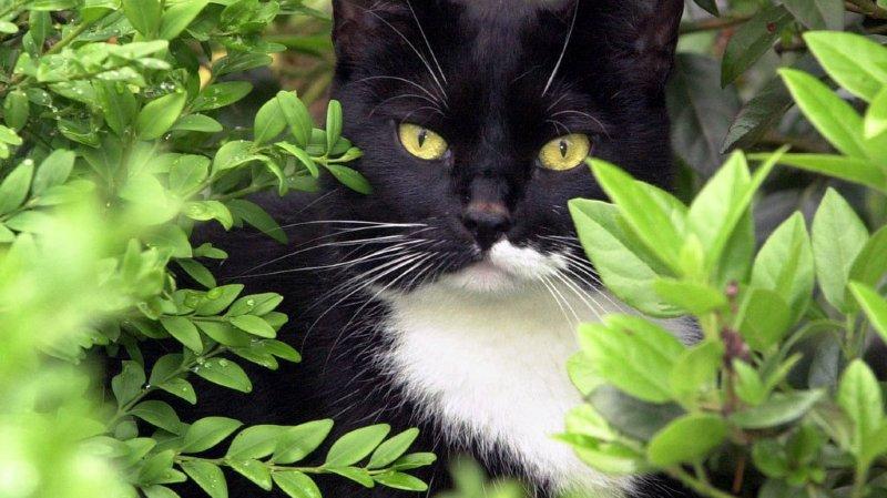 Une pétition demande la castration des chats errants.