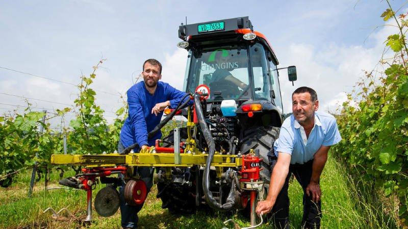 Changins planche sur le désherbage des vignes sans herbicides: résultats contrastés