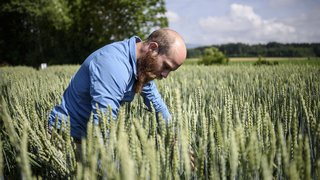 3 idées pour se passer de pesticides