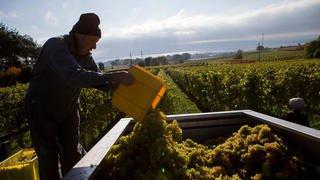 Le canton de Vaud adapte les quotas viticoles 2018 à la situation du marché