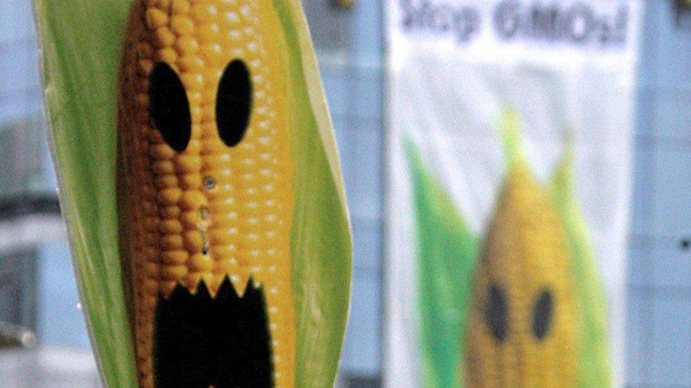 Les OGM génèrent des protestations depuis leur apparition.