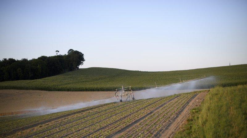 Le déficit hydrique pousse les agriculteurs à arroser leurs champs.