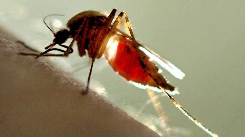 Plusieurs paramètres influencent les diptères dans le choix de leur proie.