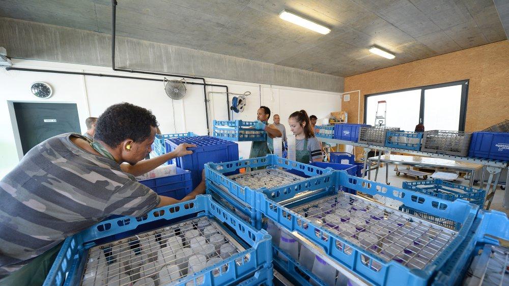 A Yverdon-les-Bains, ecomanif lave les verres réutilisables, dont ceux de Caribana