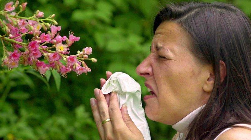 Allergies: la canicule pourrait bien raccourcir les pics de pollen