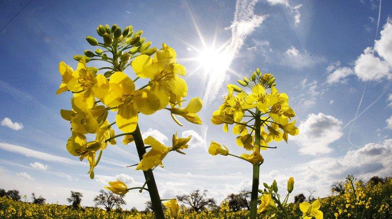 Climat: la sécheresse augmente les concentrations de CO2 dans l'air