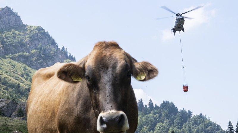 Sécheresse: l'Aide Suisse aux Montagnards débloque 500'000 francs pour l'eau dans les alpages
