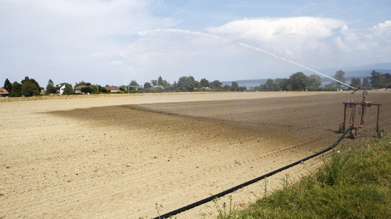 Sécheresse: cantons et Confédération prennent des mesures pour les paysans