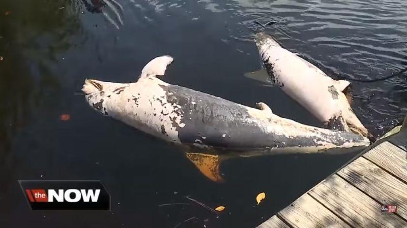 Hécatombe dedauphinset de phoques sur les côtes américaines
