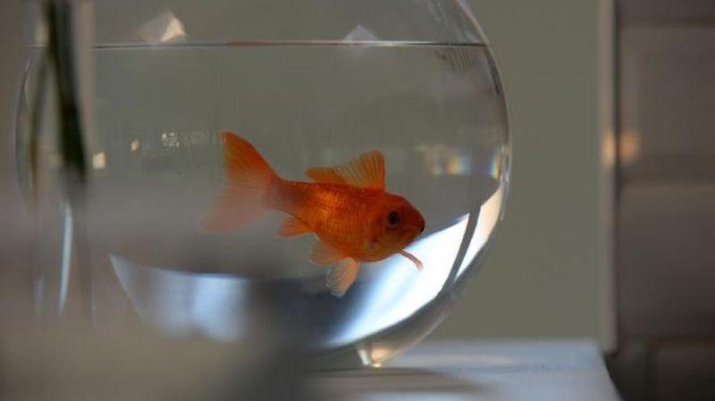Un refuge pour poissons rouges à l'Aquarium de Paris