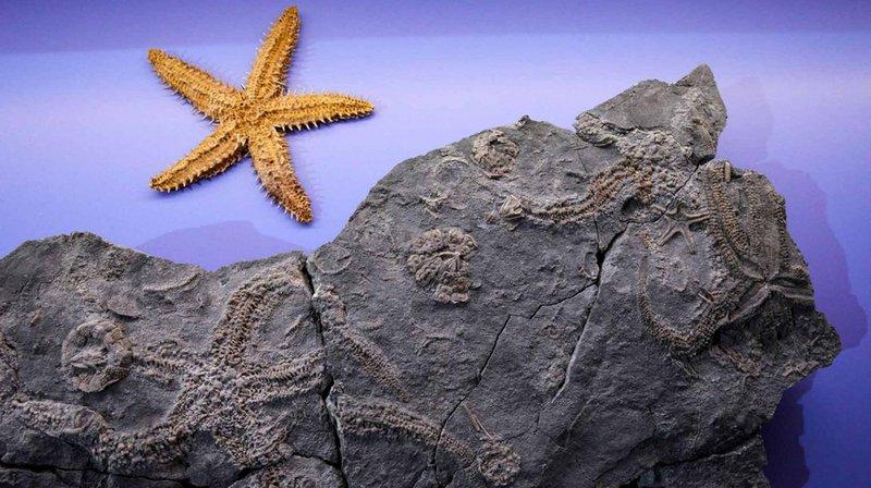 Exposition de fossiles rares au musée d'histoire naturelle de Berne