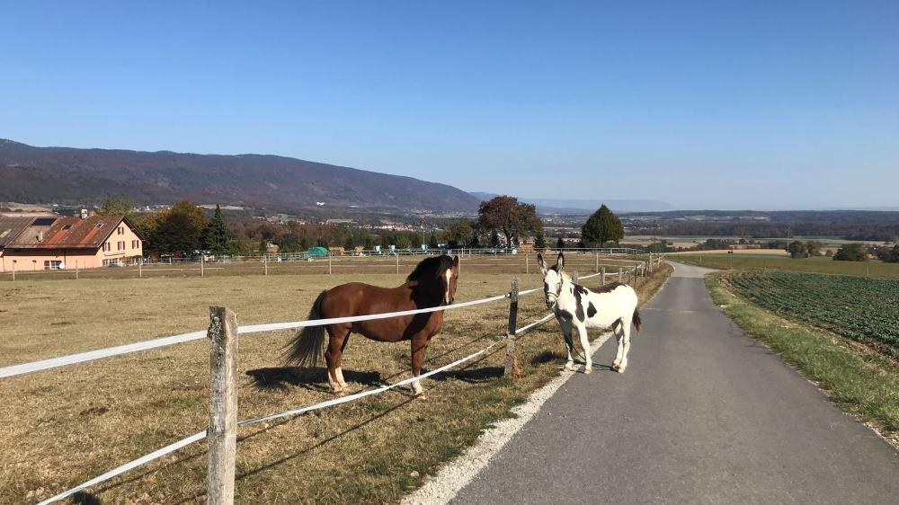 L'âne Oreo s'est enfui de son enclos à Gilly et a été retrouvé près de ce cheval, à Essertines-sur-Rolle.
