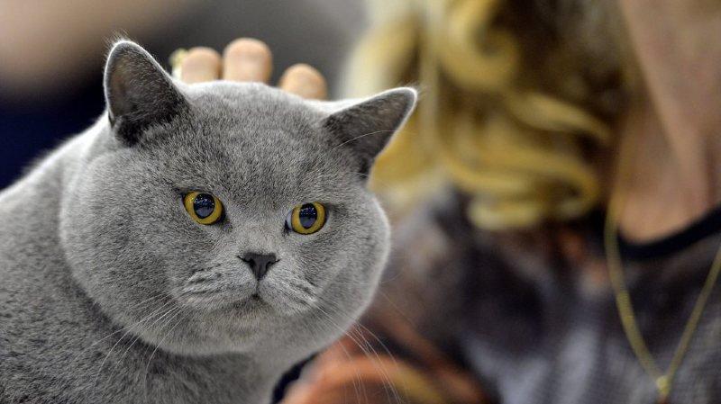 Animaux de compagnie: une campagne appelle les propriétaires à faire castrer leurs chats