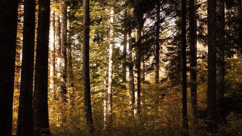 Feux en forêt: le canton de Vaud appelle à la prudence