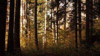Pour économiser plus, Burtigny tourne le dos au groupement forestier