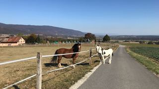 Gilly: l'âne fugueur Oreo a mobilisé la région