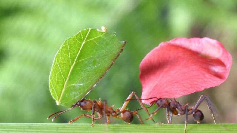 Connaissance 3 : Organisation sociale des fourmis