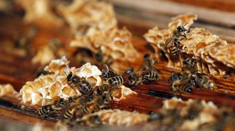 Un test de santé suisse pour sauver les abeilles