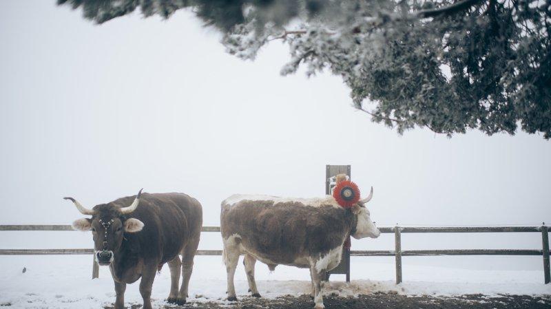 Météo: sortez les manteaux, le froid et la neige arrivent en Suisse ce week-end!