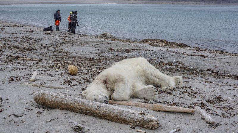 Environnement: les populations d'animaux ont diminué de 60% à cause de l'activité humaine