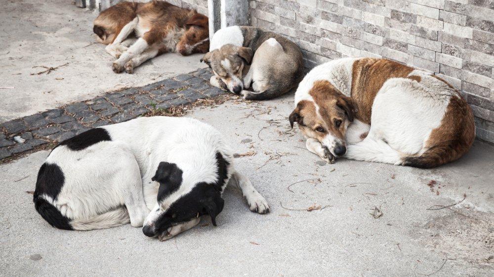 A la tête d'un institut de beauté canine à Nyon, elle détenait à son domicile une cinquantaine de chiens (photo d'illustration).