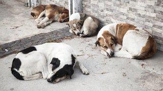 Nyon: condamnée pour avoir négligé sa cinquantaine de chiens