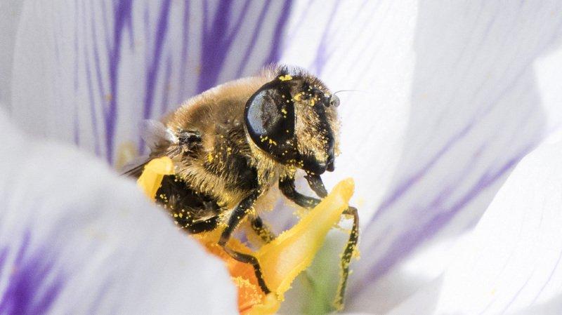 Une pétition de plus de 165'000 signatures pour sauver les insectes en Suisse