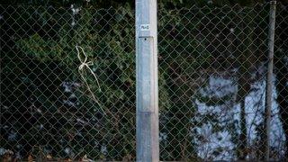 La Rippe doit changer les lampadaires attaqués par l'urine des chiens