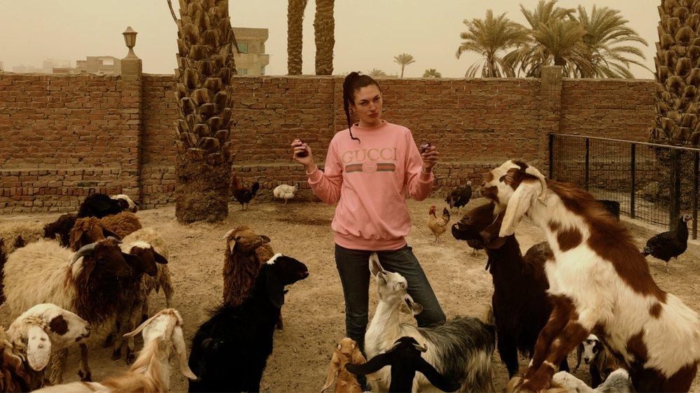 Virginie Morillo réside sur l'île d'Al Qursayah, au Caire. Point de transports, mais des chèvres!