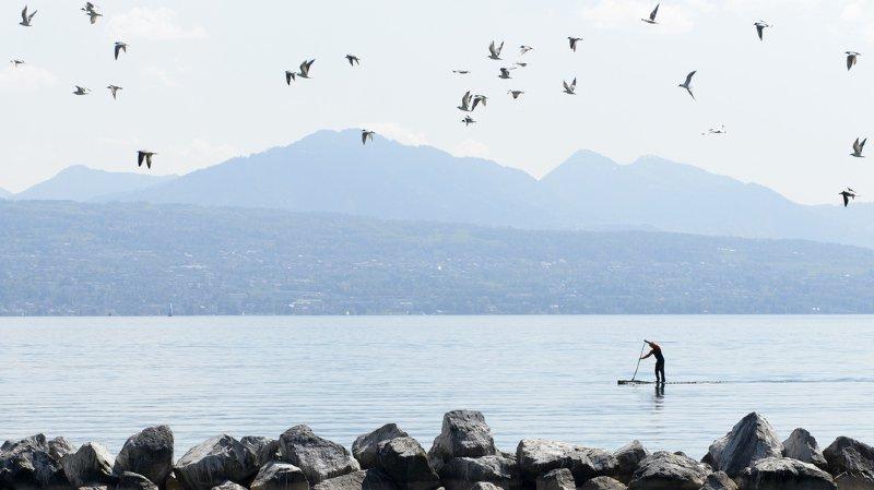 Environnement: le stand-up paddle dérange les oiseaux, même à grande distance
