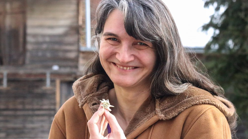 Caroline Cuennet s'est passionnée pour les edelweiss qu'elle cultive à Saint-Cergue et bientôt à Gingins.