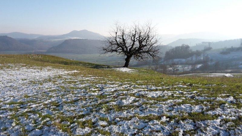 Les Alpes ont joué un rôle de barrière météo très efficace en ce début d'année, avec des situations diamétralement opposées selon que l'on se trouve au Nord ou au Sud.