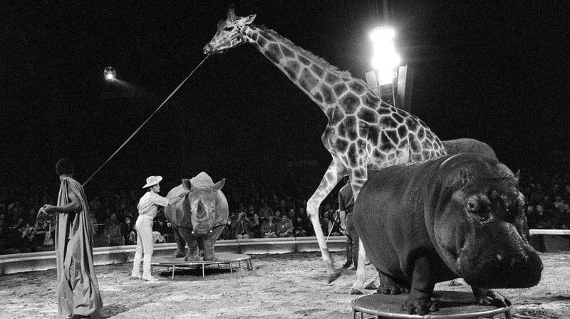 Cirque Knie: à l'occasion du centenaire, retour en images sur son histoire