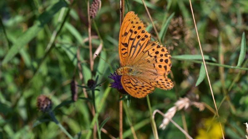 """Les insectes sont """"d'une importance vitale pour les écosystèmes planétaires""""."""