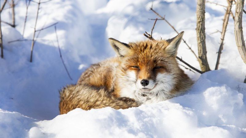 Comment les animaux passent l'hiver à La Garenne